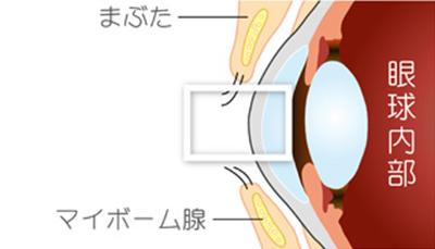 イメージ:眼球