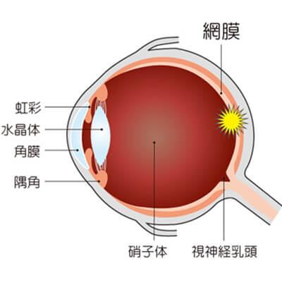イメージ:硝子体の役割
