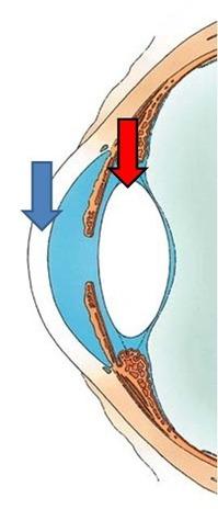 角膜と水晶体